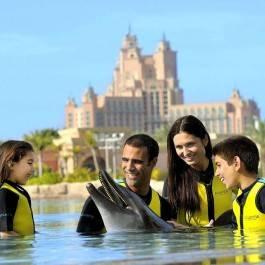 Nage avec les dauphins