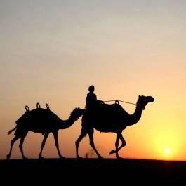 Excursion Désert en chameau & Diner