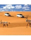 Safari Désert Luxe Matinée