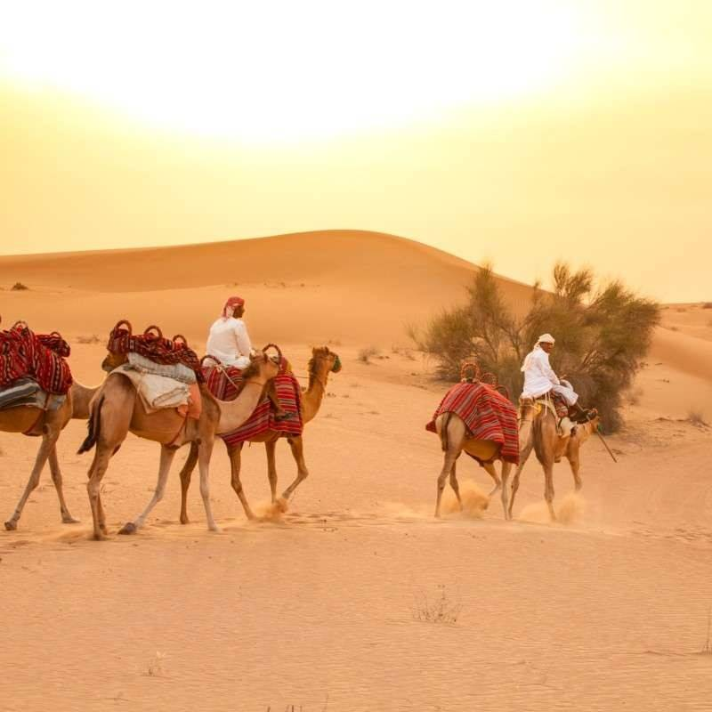 Camel morning desert safari dubai camel desert safari dubai thecheapjerseys Image collections