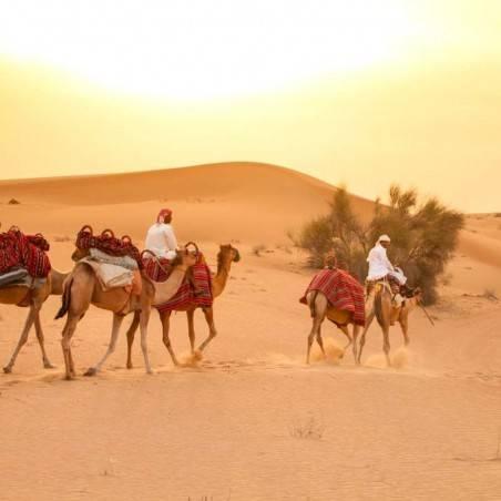 Excursion Désert en chameau Matinée