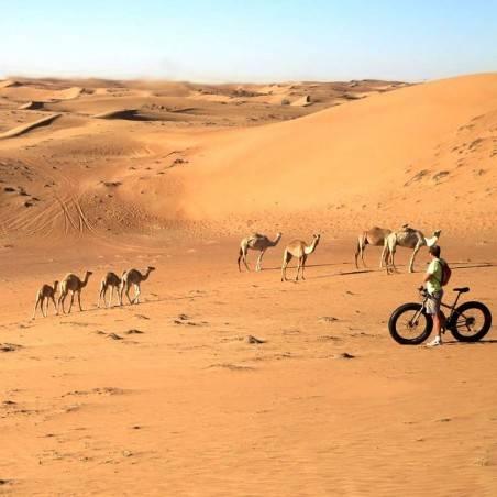 Safari Désert Héritage Matinée