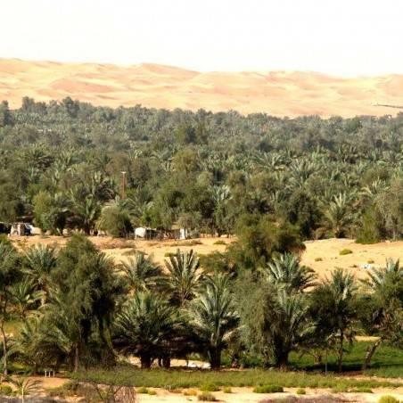 Excursion Désert Liwa